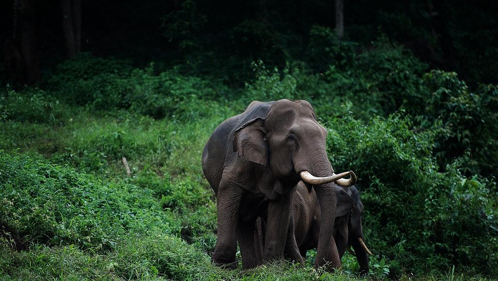 Positief denken: hoe een wilde olifant te temmen